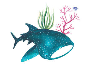 Marta Casals Juanola, Shark Whale (Spain, Europe)