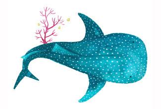 Marta Casals Juanola, Shark Whale with corals (Spain, Europe)