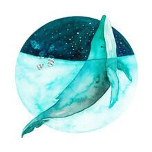 Marta Casals Juanola, Blue Whale (Spanien, Europa)