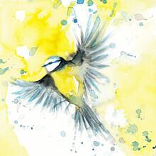 Marta Casals Juanola, Flying bird (Spain, Europe)