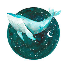 Marta Casals Juanola, Cosmic Whale (Spain, Europe)