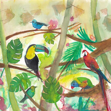 Marta Casals Juanola, Tropical birds (Spain, Europe)