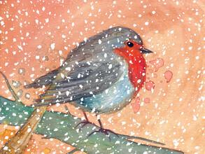 Marta Casals Juanola, Winter robin (Spain, Europe)