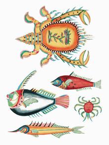 Vintage Nature Graphics, Louis Renard: Surreale Illustrationen von Fischen und Krabben (Frankreich, Europa)