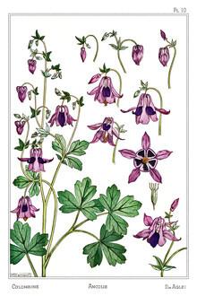 Vintage Nature Graphics, Maurice Pillard Verneuil: Iris (Frankreich, Europa)