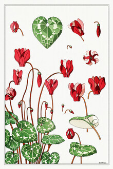 Vintage Nature Graphics, Maurice Pillard Verneuil: Alpenveilchen (Frankreich, Europa)