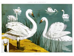 Vintage Nature Graphics, Cygne Sauvage aus L'animal dans la decoration (Frankreich, Europa)