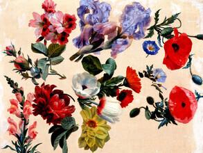 Vintage Nature Graphics, Jacques-Laurent Agasse: Studien zu Sommerblumen (Frankreich, Europa)