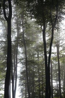 Nadja Jacke, Fog in the deciduous forest (Germany, Europe)
