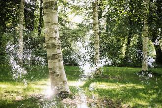 Nadja Jacke, Birch trees in summer (Germany, Europe)