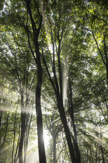 Nadja Jacke, Fog and sunlight in the forest (Germany, Europe)