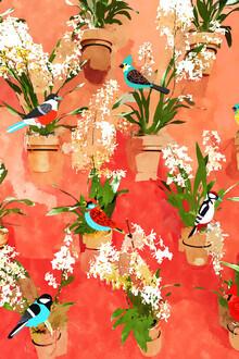 Uma Gokhale, Birds of different feathers flock together (India, Asia)