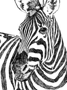 Uma Gokhale, Zebra (India, Asia)