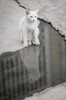 AJ Schokora, Cat Life (China, Asien)