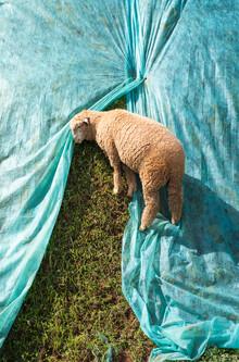 AJ Schokora, Lone Lamb (Deutschland, Europa)