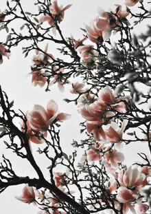 Studio Na.hili, Beautiful Blush Magnolia (Germany, Europe)