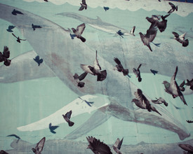 Erin Kao, Pigeons + Whales (United States, North America)