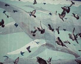 Erin Kao, Pigeons + Whales (Vereinigte Staaten, Nordamerika)