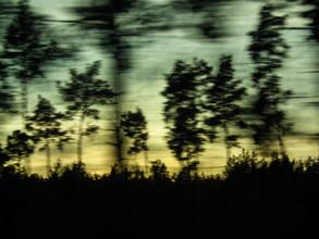 Christiane Wilke, treescape (Germany, Europe)