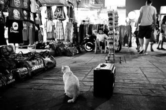 Philipp Langebner, suitcat (Thailand, Asien)