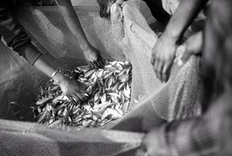 Jakob Berr, Fishermen evaluate their catch (Bangladesh, Asien)