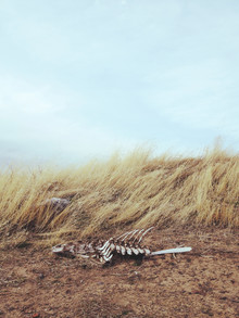Kevin Russ, Winded Skeleton (United States, North America)