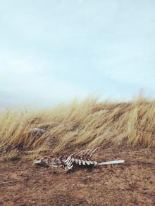 Kevin Russ, Winded Skeleton (Vereinigte Staaten, Nordamerika)