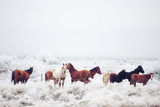 Kevin Russ, Winter Horseland (United States, North America)