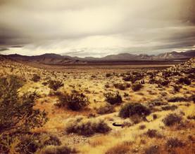 Michael Brandone, Desert #8 (Vereinigte Staaten, Nordamerika)