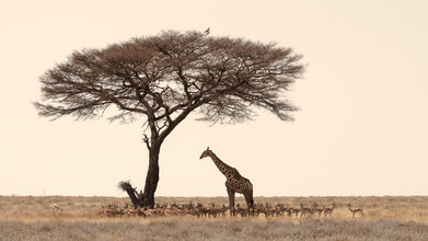 Dennis Wehrmann, Searching for shade in middays heat - Etosha National Park Namib (Namibia, Africa)