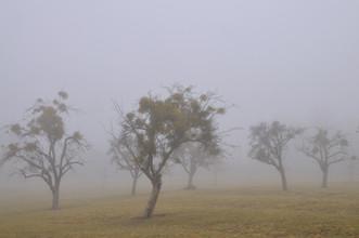 J.A. Fischer, Baeume im Nebel (Deutschland, Europa)