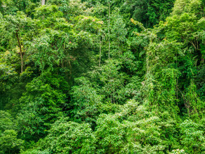 Johann Oswald, Dschungel Mauer (Indonesien, Asien)