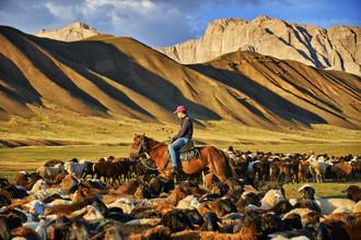 René Ruis, Hirte in mitten seiner Herde (Usbekistan, Asien)
