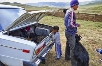 René Ruis, Ziegen im Kofferraum (Kirgistan, Asien)