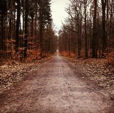 Michael Brandone, Weg in den Wald (Deutschland, Europa)