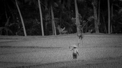 Manuel Kürschner, Woman in Rice Terrace (Indonesia, Asia)