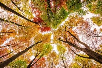 Heiko Gerlicher, Die Farben des Herbstes (Deutschland, Europa)