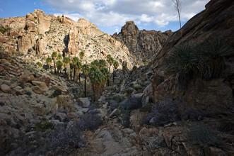 Jakob Berr, Lost Palms Oasis, Joshua Tree National Park (Vereinigte Staaten, Nordamerika)