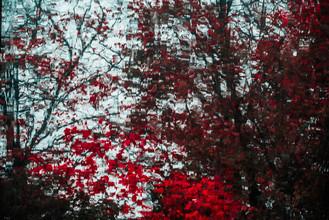 blutiger Herbst - fotokunst von Sascha Hoffmann-Wacker