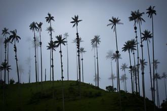 Jonas Schleske, Schemenhafte Palmen (Kolumbien, Lateinamerika und die Karibik)