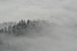 Sascha Hoffmann-Wacker, The fog (Germany, Europe)