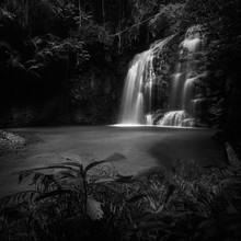 The Jungle Light - Fineart photography by Daniel Tjongari