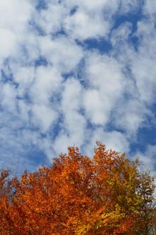 Stefan Wolpert, Herbstfarben (Deutschland, Europa)