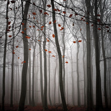 Carsten Meyerdierks, The Beauty Of November (Germany, Europe)