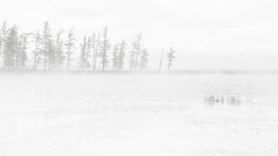 Schoo Flemming, conifers in fog and lake (Mongolei, Asien)