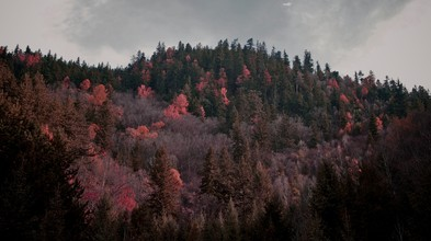 Ignacio Garnham, Autumn (China, Asien)