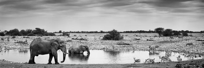 Franzel Drepper, Okaukoejo waterhole (Namibia, Africa)