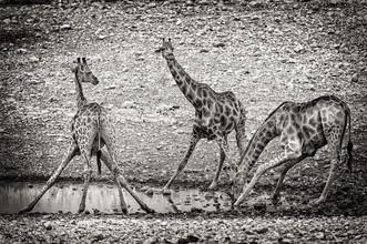 Franzel Drepper, giraffe at waterhole A (Namibia, Africa)