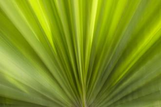 Jens Rosbach, Palmenfächer (Ägypten, Afrika)