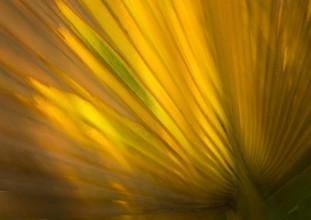 Jens Rosbach, Palme und Sonne (Ägypten, Afrika)